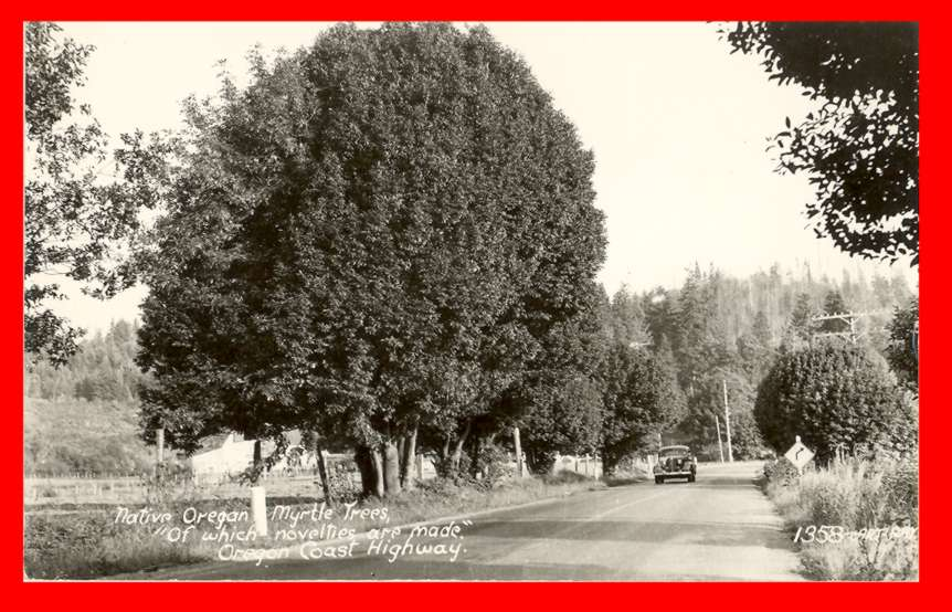 RPPC Photo Postcard Native Oregon Myrtle Trees Old Car