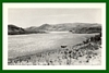 RPPC Real Postcard aerial view Horses along banks of Snake River OR
