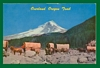 Postcard Overland Oregon Trail Horses Wagon Train 1940s